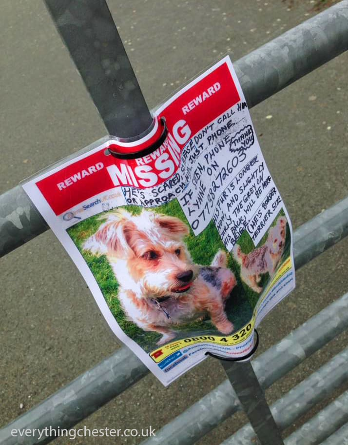 Saltney River Dee Missing Dog Poster